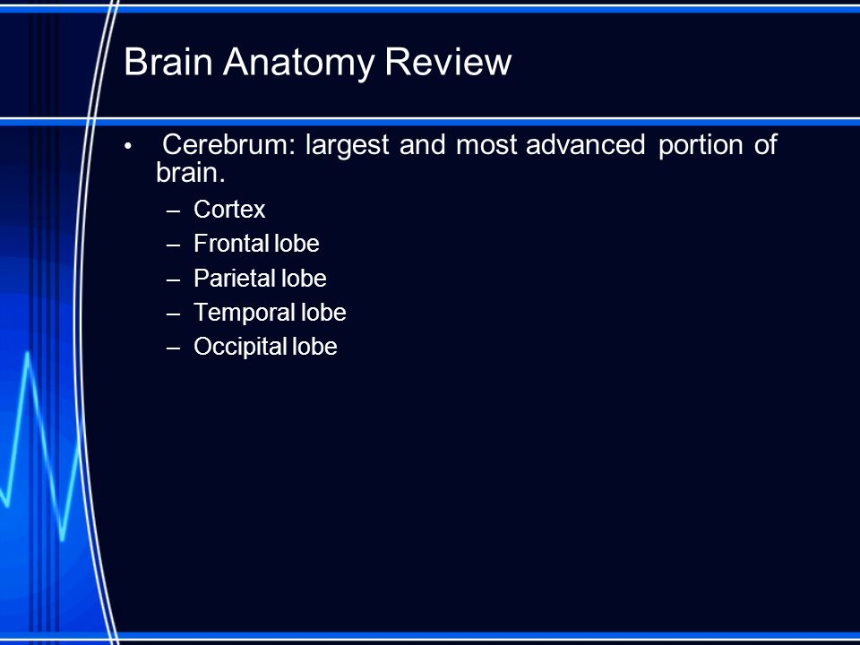 Brain Anatomy Review Cerebrum: largest and most advanced portion of brain. Cortex. Frontal lobe. Parietal lobe.
