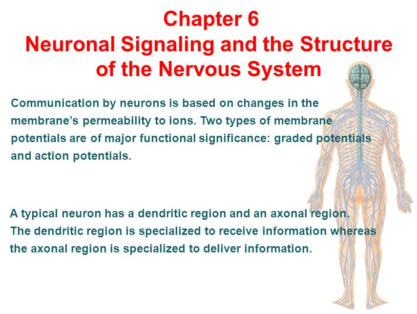 Human Physiology Chapter 6 The Mechanisms Of Body Function Ppt