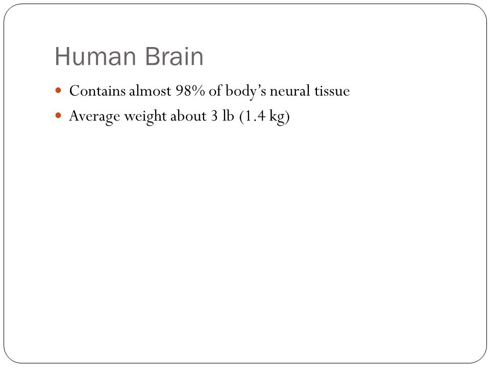 Human Brain Contains almost 98% of body's neural tissue