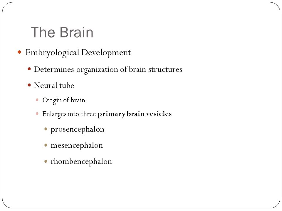 The Brain Embryological Development