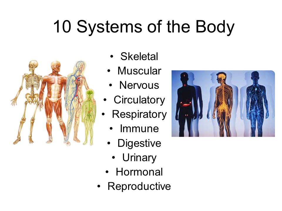 The Human Body Ppt Video Online Download