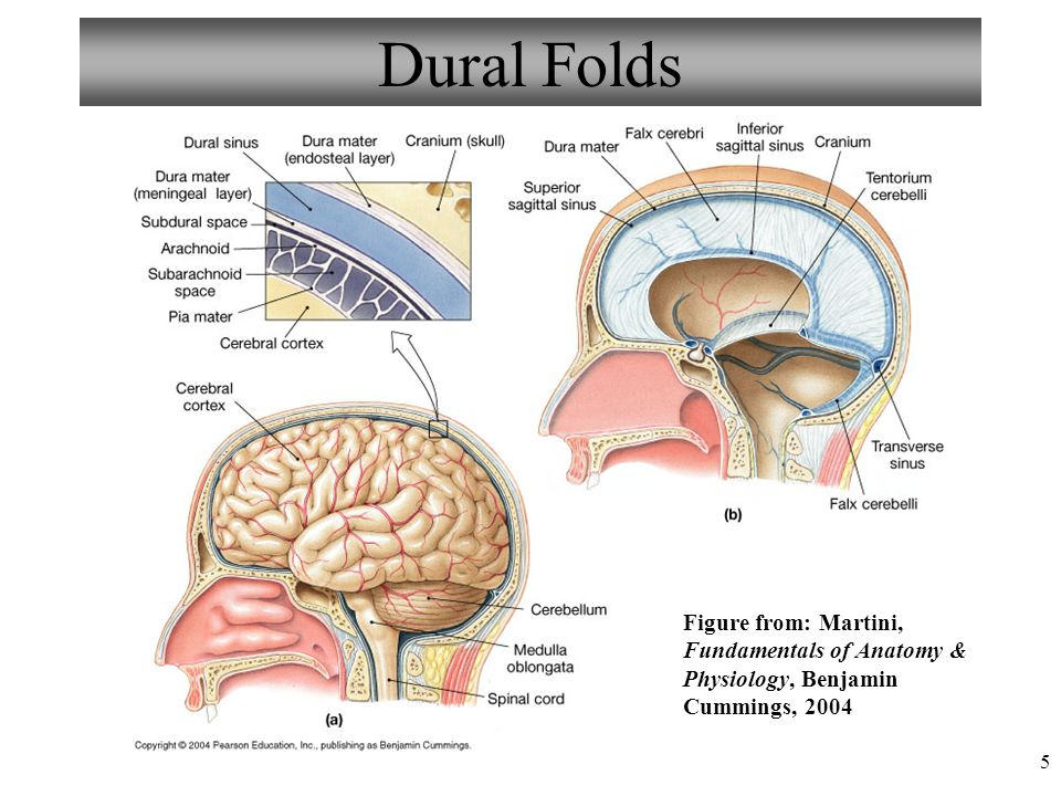 Diagram Of The Dural Folds - Block And Schematic Diagrams •