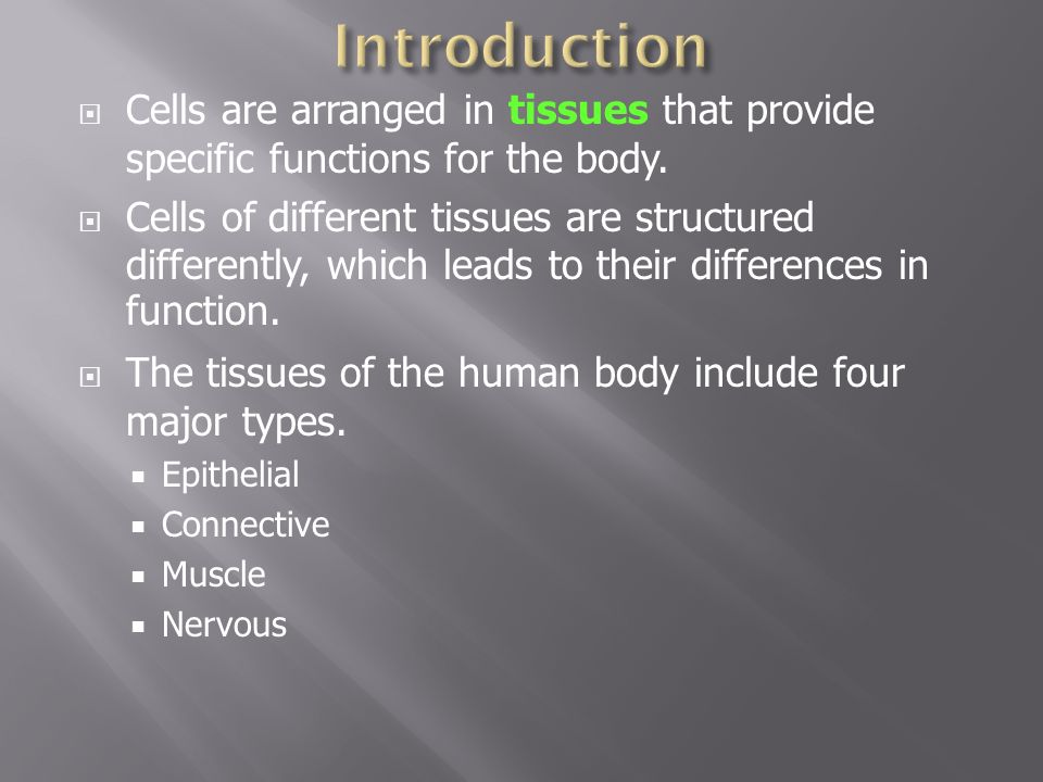 5 different tissues found in the human body