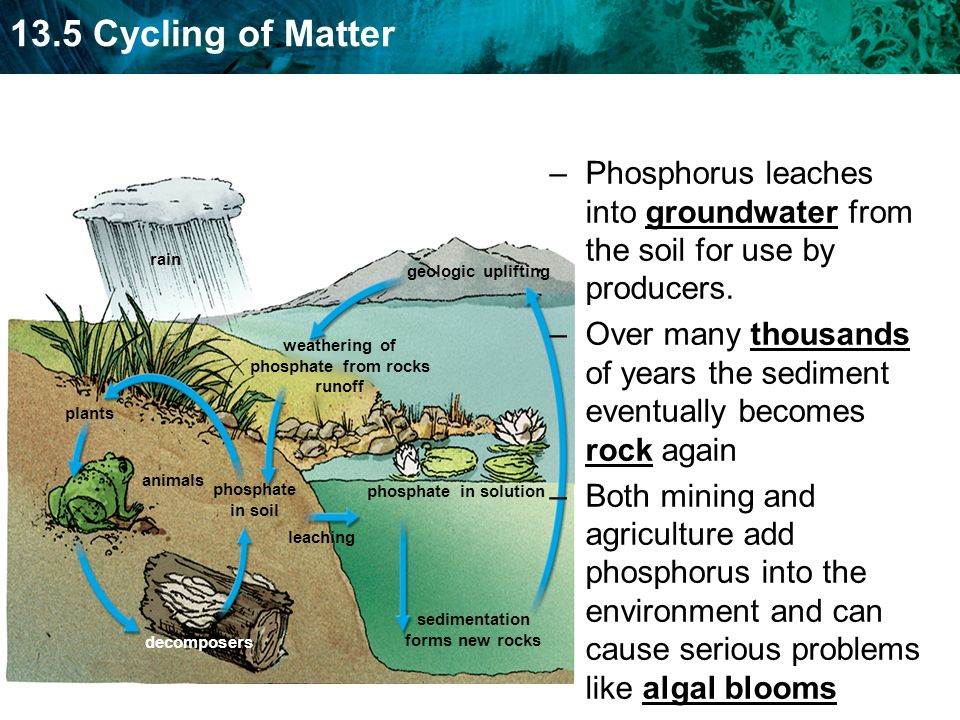 Phosphorus leaches into groundwater from the soil for use by producers.