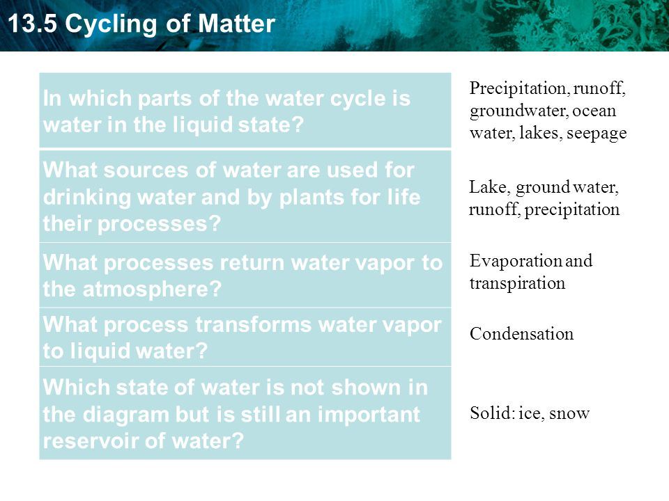 In which parts of the water cycle is water in the liquid state