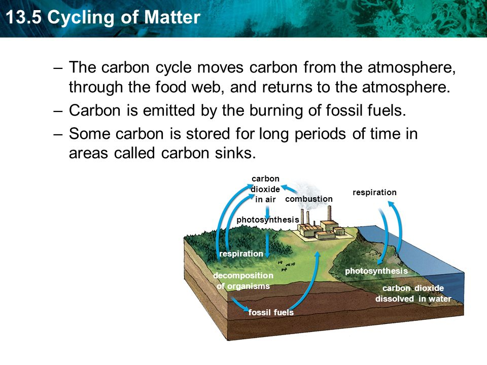 Carbon is emitted by the burning of fossil fuels.