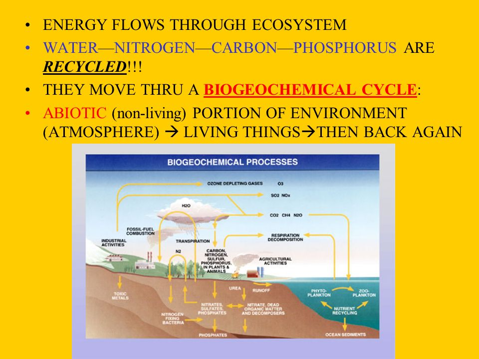 ENERGY FLOWS THROUGH ECOSYSTEM