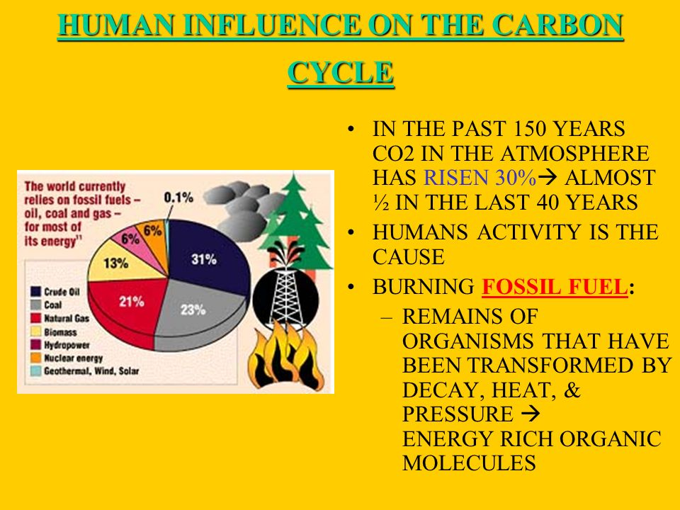 HUMAN INFLUENCE ON THE CARBON CYCLE