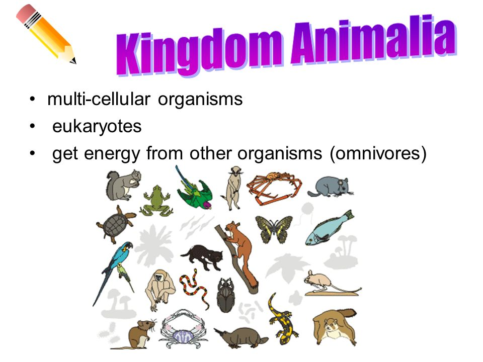 Image of: Phylum Porifera Kingdom Animalia Multicellular Organisms Eukaryotes Slideplayer Cells And Classification Of Life Reassessment Review Ppt Video