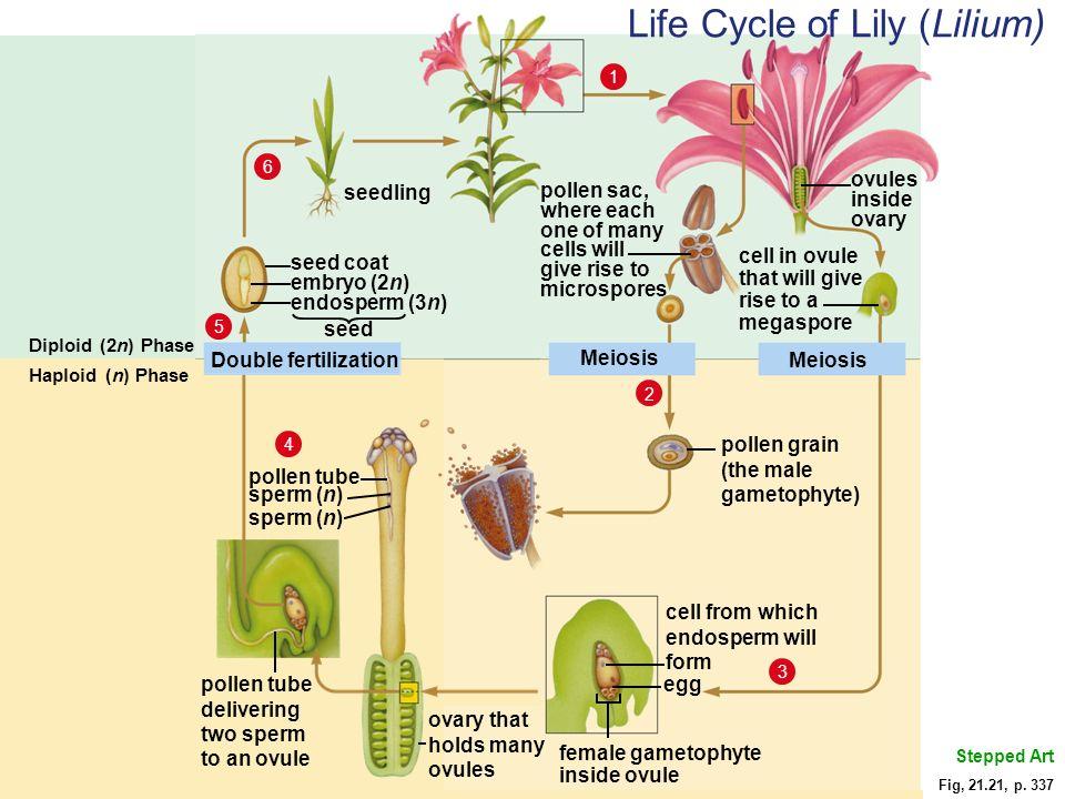 Chapter 21 Plant Evolution Ppt Video Online Download