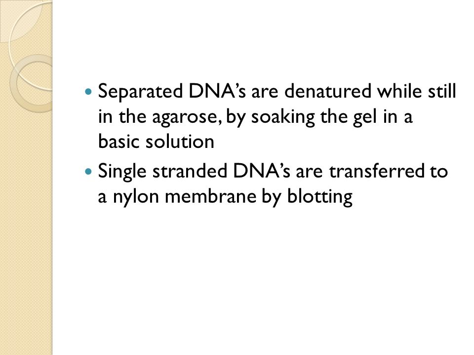Separated DNA's are denatured while still in the agarose, by soaking the gel in a basic solution
