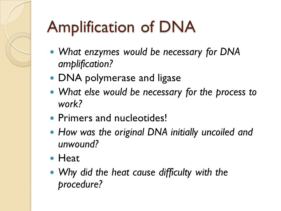 Amplification of DNA What enzymes would be necessary for DNA amplification DNA polymerase and ligase.