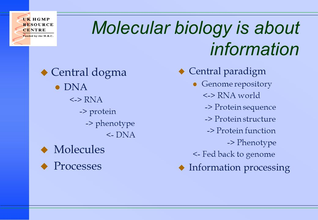 Molecular biology is about information