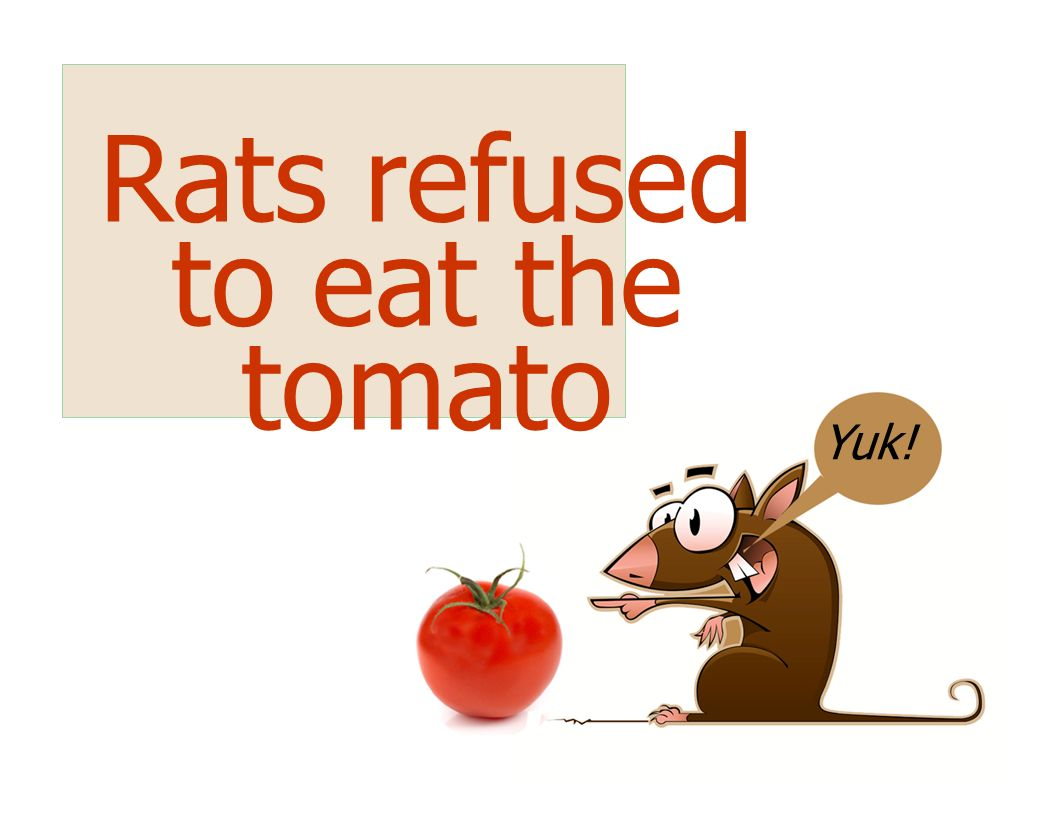Rats refused to eat the tomato Yuk!