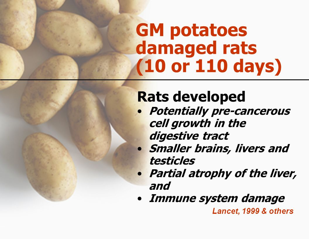 GM potatoes damaged rats (10 or 110 days)