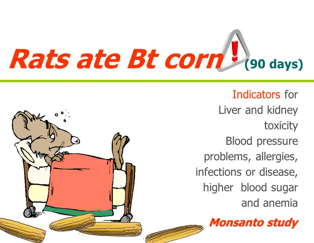 Rats ate Bt corn (90 days) Indicators for Liver and kidney toxicity