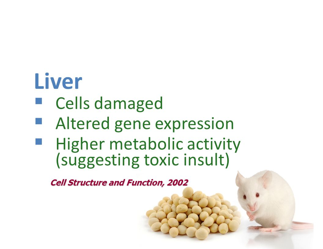 Mice fed GM soy Liver Cells damaged Altered gene expression