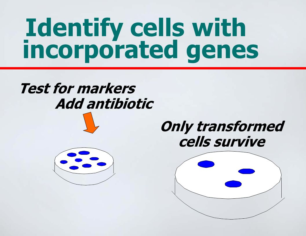 Identify cells with incorporated genes