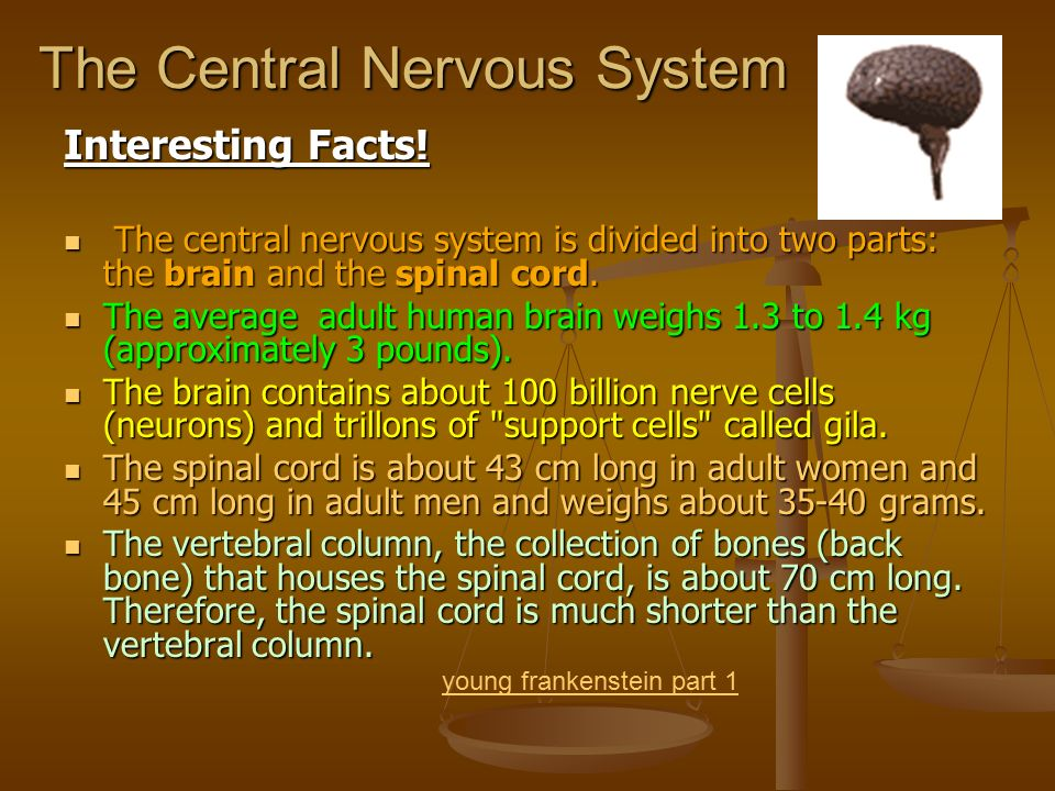 The Nervous System Anatomy & Physiology. - ppt download