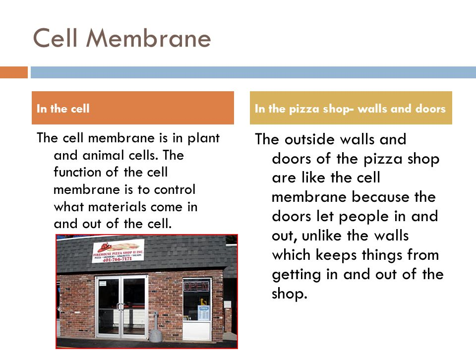 Cell Analogy Pizza Shop Ppt Video Online Download