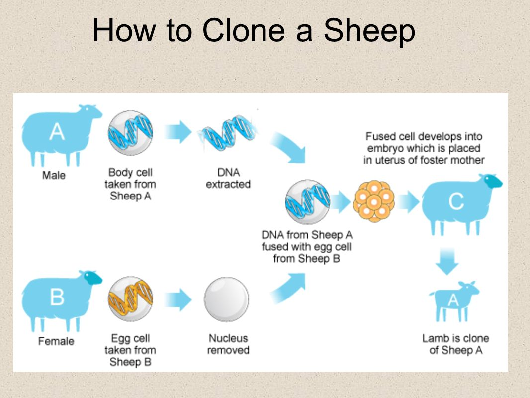 How to Clone a Sheep
