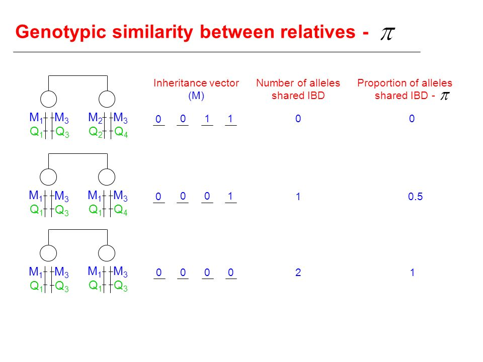 Genotypic similarity between relatives -