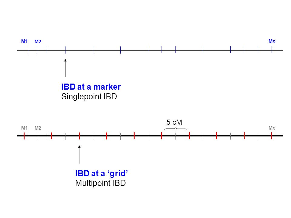 IBD at a marker Singlepoint IBD IBD at a 'grid' Multipoint IBD 5 cM M1