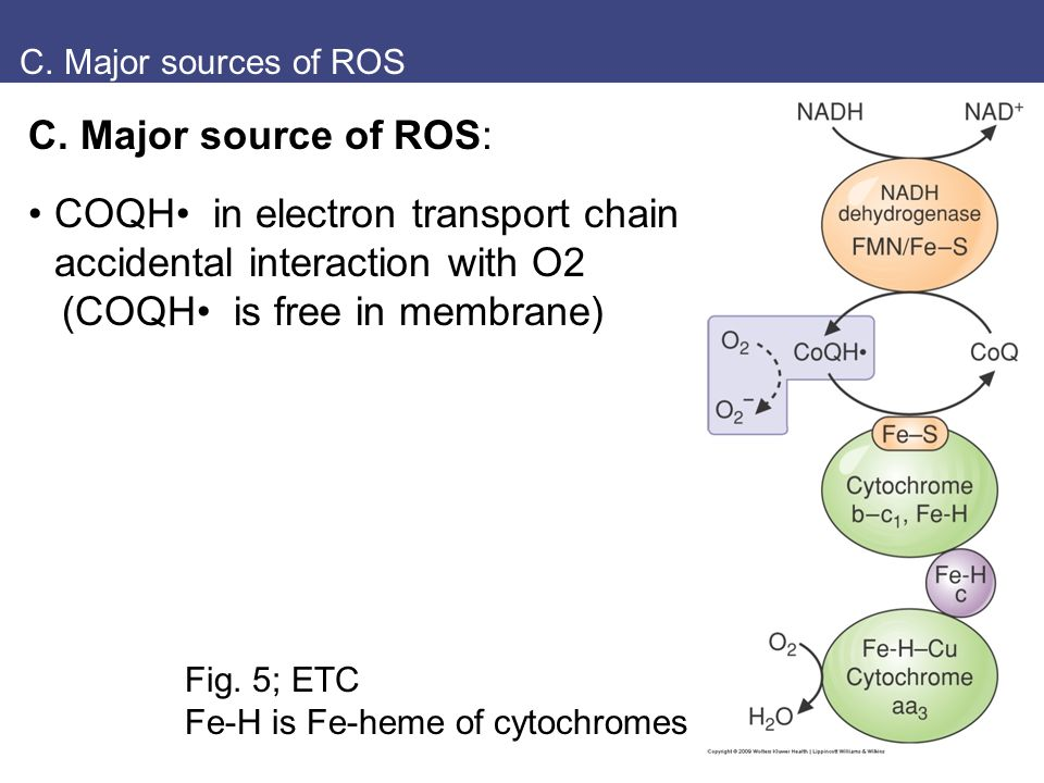 Explain how O2 is both essential to life and toxic - ppt
