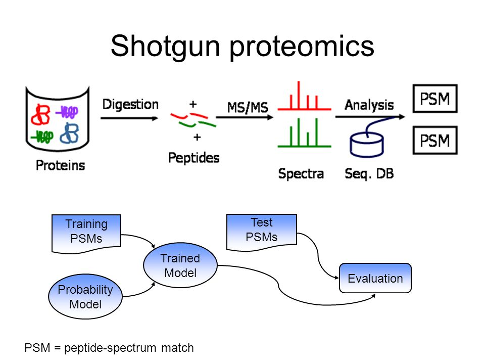 Shotgun proteomics Training PSMs Test PSMs Trained Model Evaluation