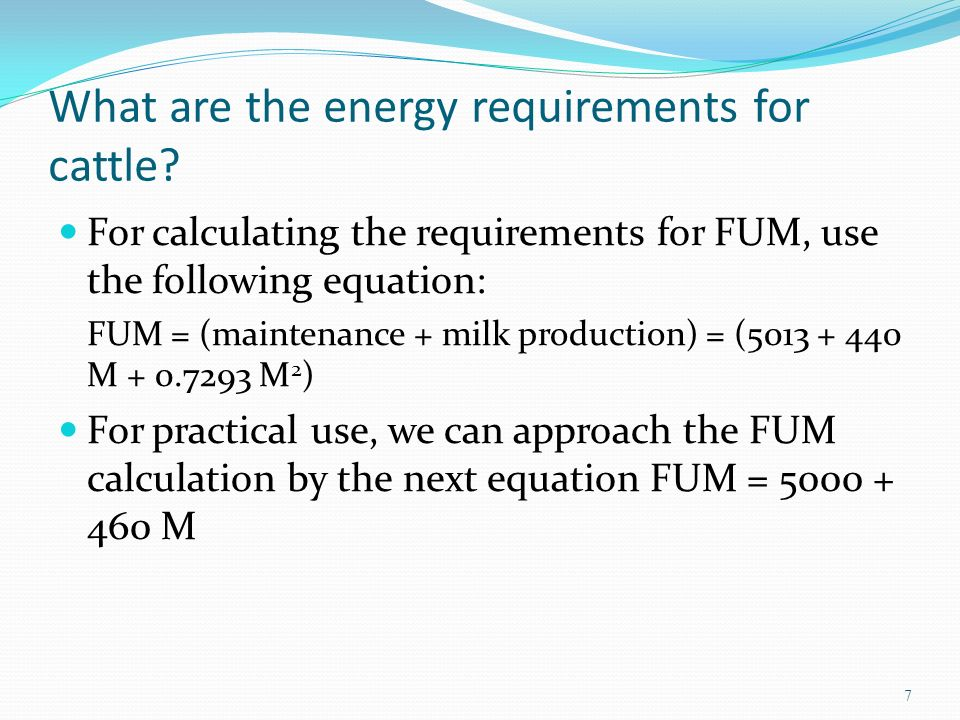 What are the energy requirements for cattle