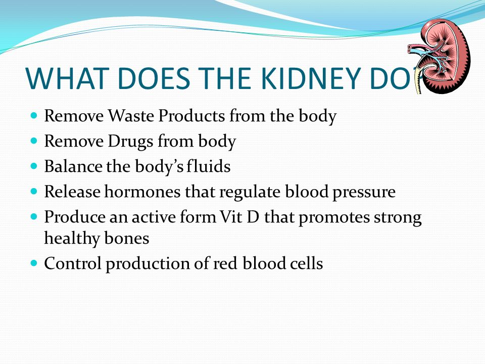 WHAT DOES THE KIDNEY DO Remove Waste Products from the body