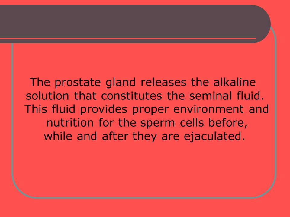 The prostate gland releases the alkaline