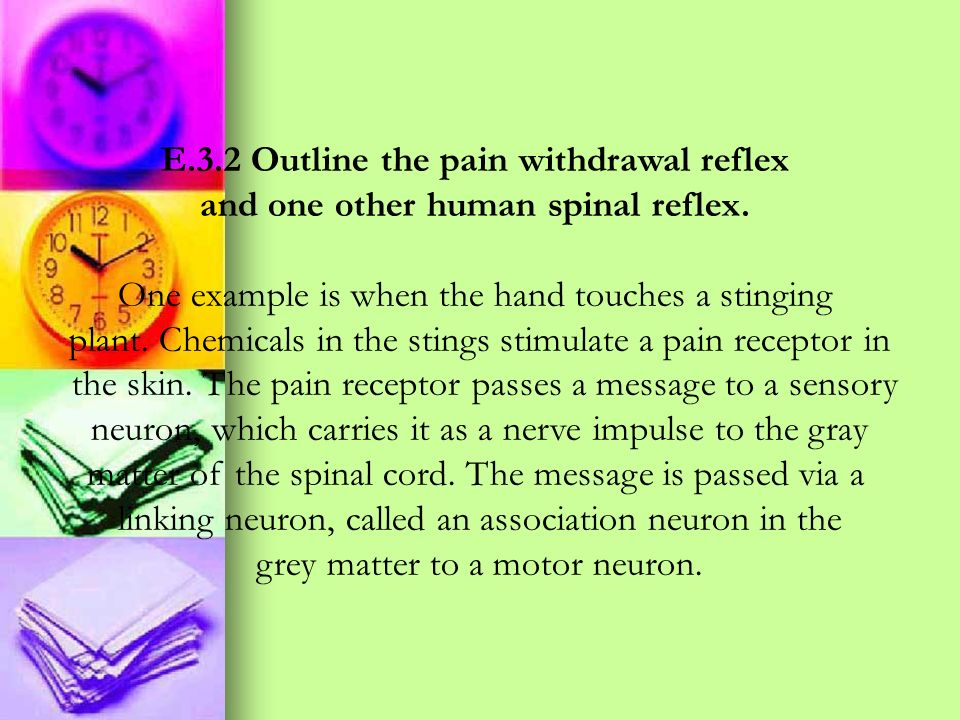 E.3.2 Outline the pain withdrawal reflex