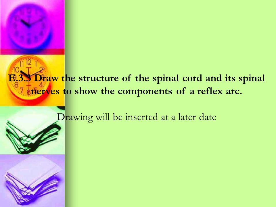 E.3.3 Draw the structure of the spinal cord and its spinal