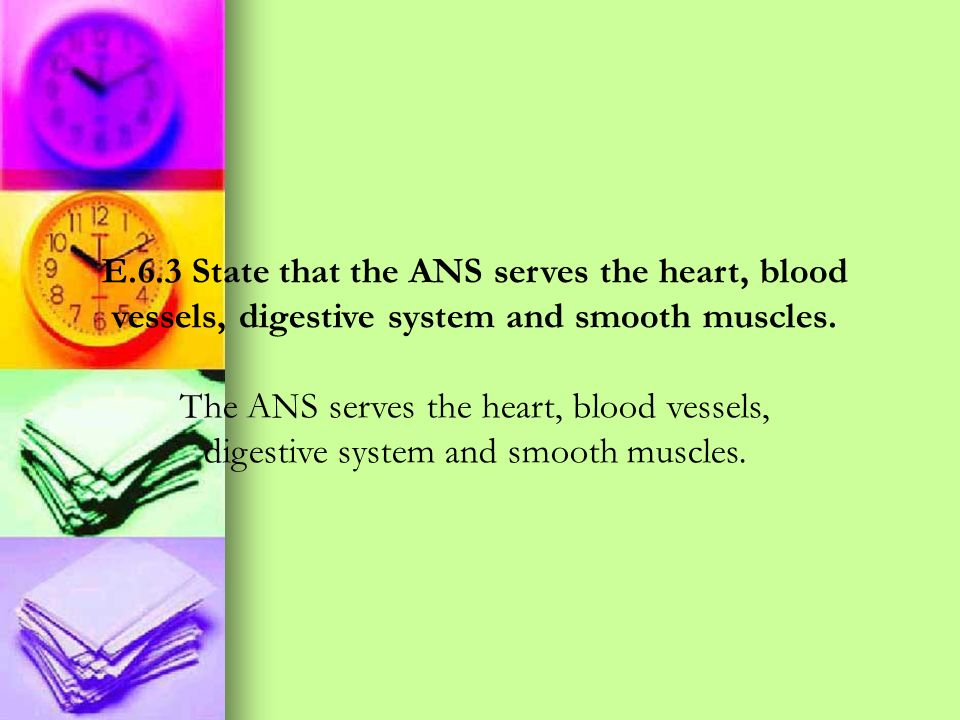 E.6.3 State that the ANS serves the heart, blood