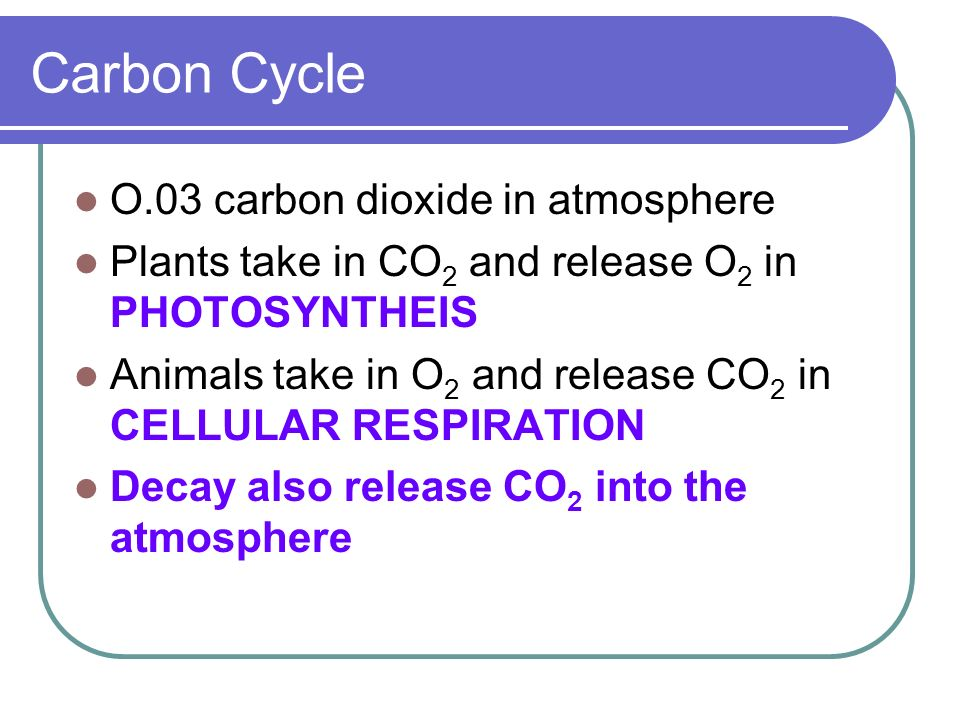 Carbon Cycle O.03 carbon dioxide in atmosphere