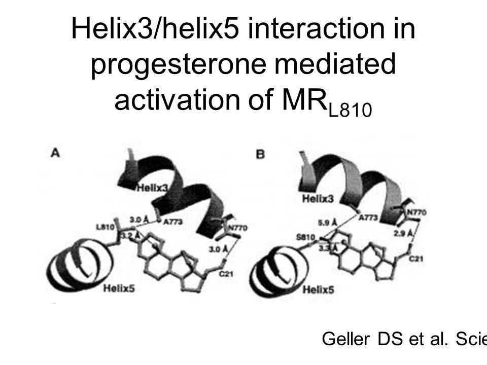 Helix3/helix5 interaction in progesterone mediated activation of MRL810