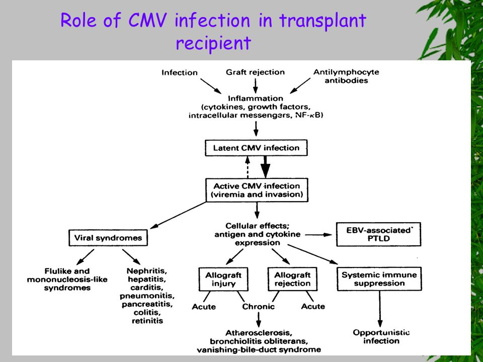Role of CMV infection in transplant recipient