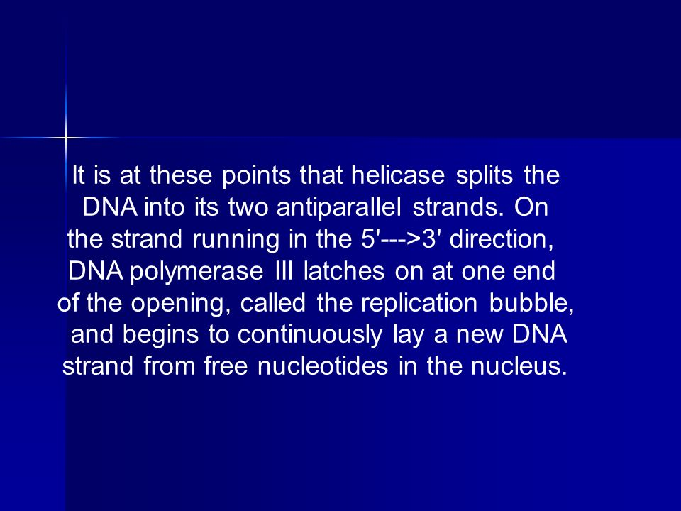 It is at these points that helicase splits the