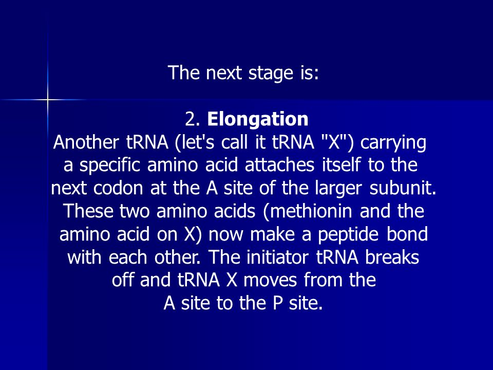 2. Elongation Another tRNA (let s call it tRNA X ) carrying