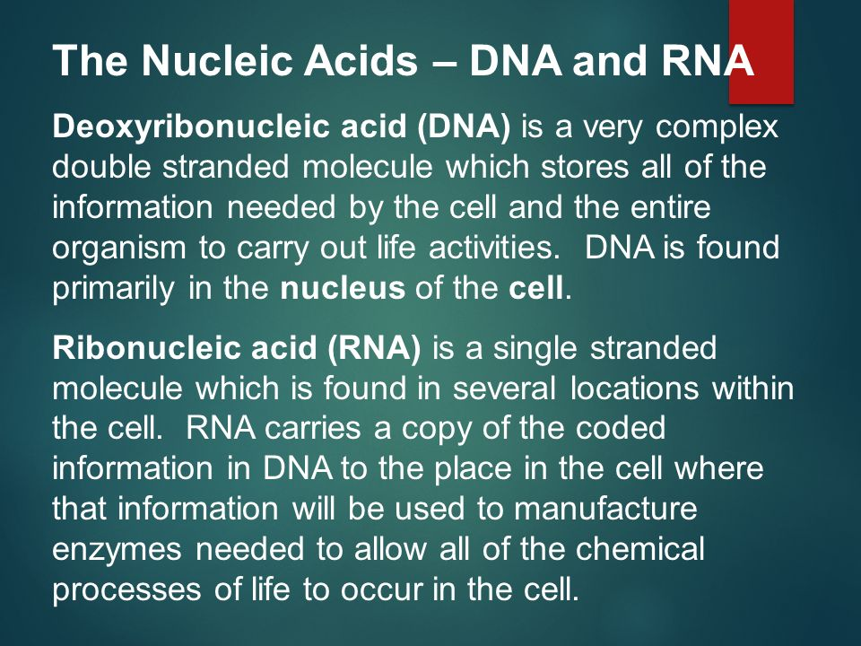 The Nucleic Acids – DNA and RNA