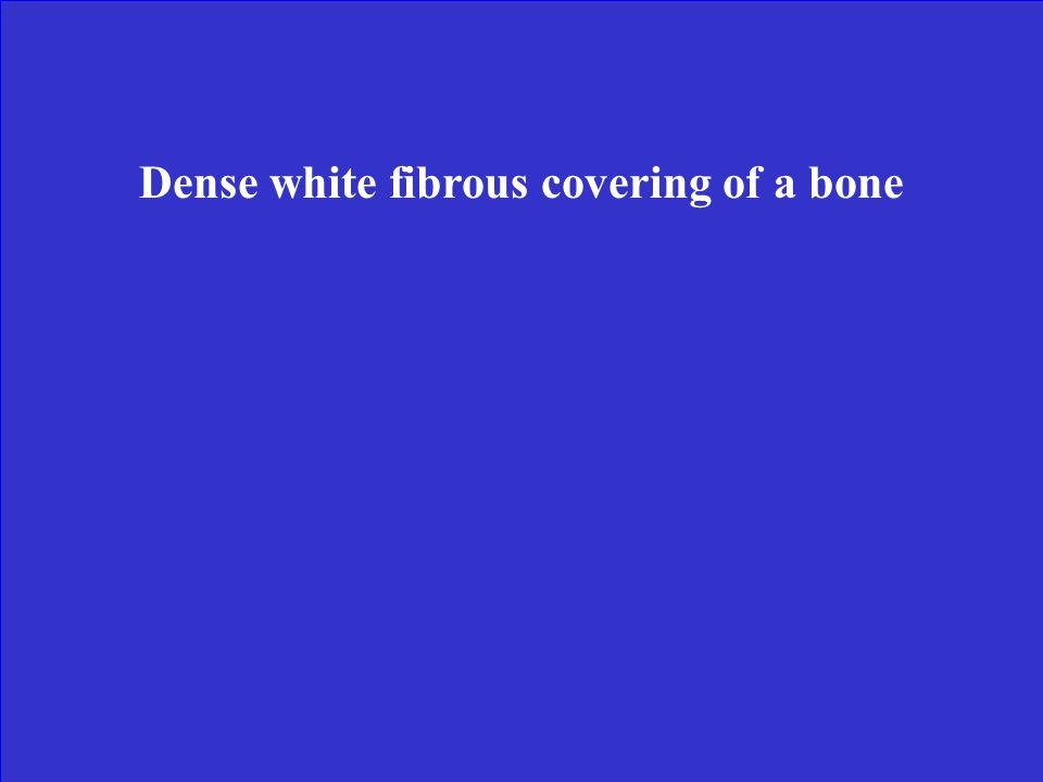Dense white fibrous covering of a bone