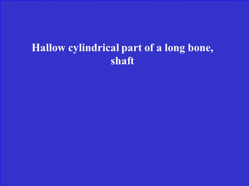 Hallow cylindrical part of a long bone, shaft