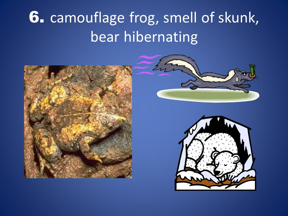 6. camouflage frog, smell of skunk, bear hibernating