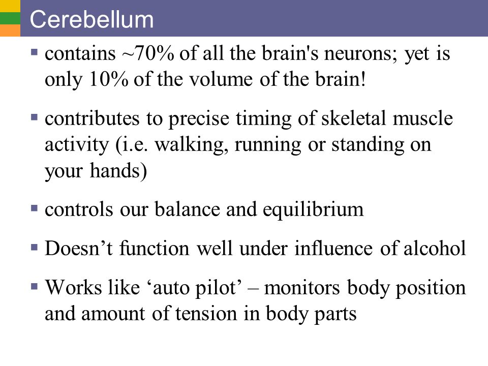 Cerebellum contains ~70% of all the brain s neurons; yet is only 10% of the volume of the brain!