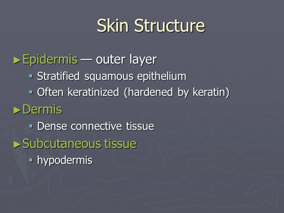 Skin Structure Epidermis — outer layer Dermis Subcutaneous tissue