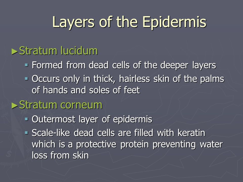 Layers of the Epidermis