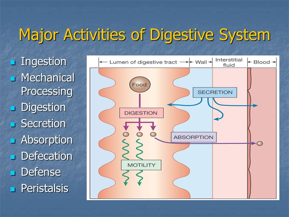 Major Activities of Digestive System