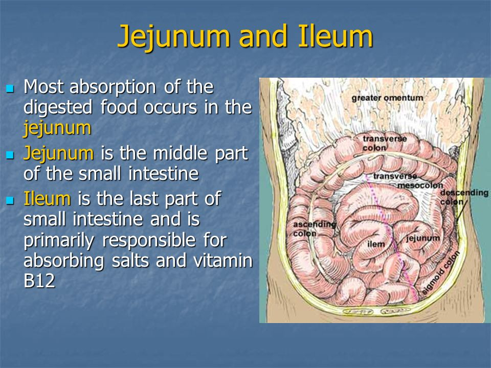 Jejunum and Ileum Most absorption of the digested food occurs in the jejunum. Jejunum is the middle part of the small intestine.