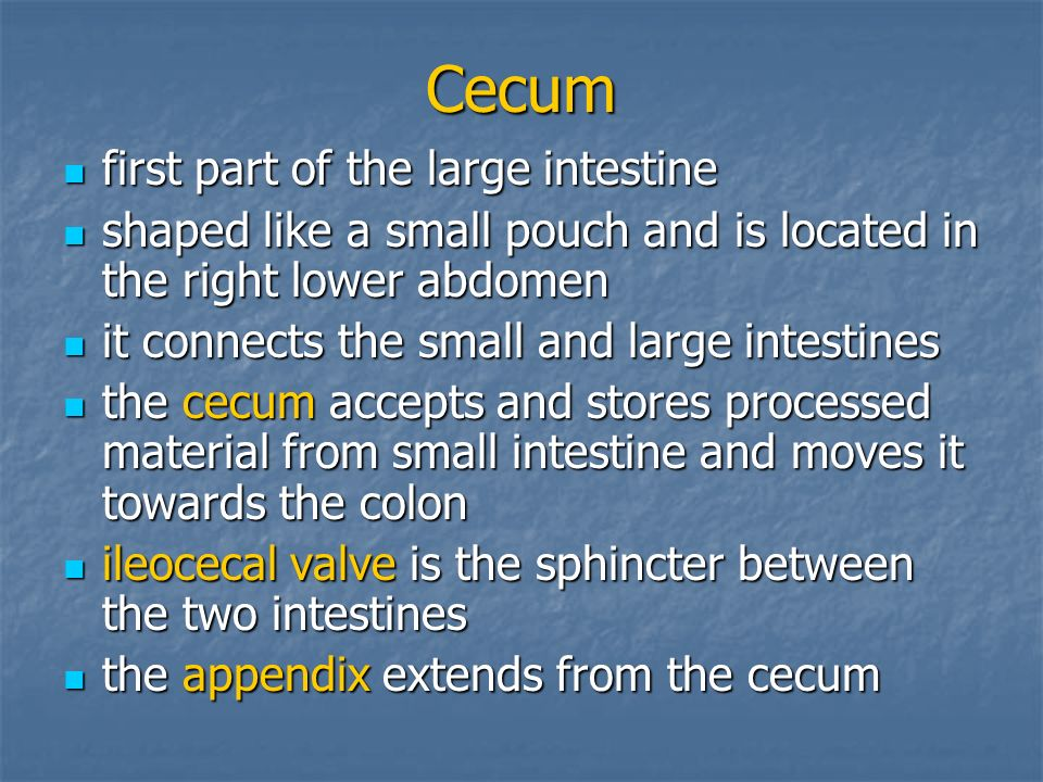 Cecum first part of the large intestine